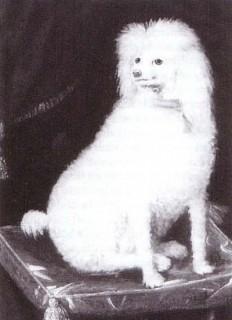 Boye, Prince Rupert's Dog